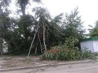 Ураган в Плавске, Фото: 2
