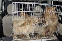 Похищенные собаки, Фото: 28