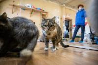 Волонтеры спасли кошек из адской квартиры, Фото: 61