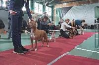 Выставка собак в Туле 26.01, Фото: 67
