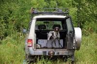 Выставка охотничьих собак под Тулой, Фото: 8