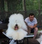 """Всероссийская выставка собак - 20 июля 2013, стадион """"Кировец"""", Фото: 6"""