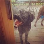 Забавные собаки, Фото: 3