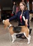 """Выставки собак в ДК """"Косогорец"""", Фото: 18"""