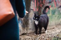 Тульские котики, Фото: 68