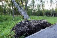 В Баташевском саду из-за непогоды упали вековые деревья, Фото: 9