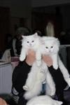 В Туле прошла международная выставка кошек, Фото: 58