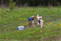 В Туле состоялись собачьи бега, Фото: 45