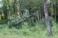 В Баташевском саду из-за непогоды упали вековые деревья, Фото: 13