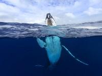 Горбатый кит в Полинезии. Craig Parry, Фото: 23
