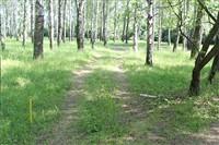 Окопы в Пролетарском парке, Фото: 5