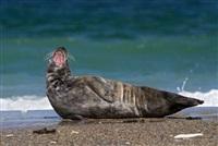 Жизнь тюленя: мечта!, Фото: 5