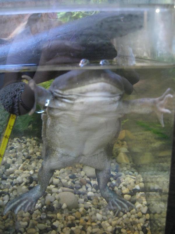 Злая, злая Щитоспинка ждет обнимашек. Ну не знаю, как по мне, то очень даже милая животинка.))))
