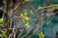 Весна 2020 в Туле: трели птиц и первые цветы, Фото: 30