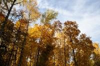 Золотая осень в Туле-2019, Фото: 63