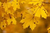 Золотая осень в Туле-2019, Фото: 100