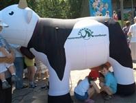 Коровка дай молочка! Фото tanzot, Фото: 15