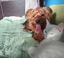 Идеальная пара!!!!!!!!