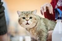 В Туле прошла выставка «Пряничные кошки» , Фото: 98