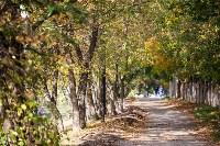 Золотая осень в Тульской области, Фото: 74