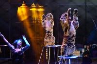 Цирковое шоу, Фото: 116