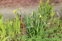 Краски весны в Туле, Фото: 26