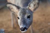 Куда свозить детей посмотреть на животных в 100 км от Тулы: обзор, Фото: 3