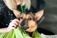 Благотворительный фестиваль помощи животным, Фото: 32