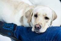 Выставка собак в Туле, Фото: 24