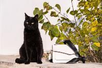 Тульские котики, Фото: 1