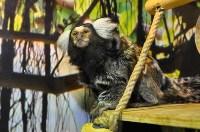У мармозеток в Тульском экзотариуме родился малыш, Фото: 3