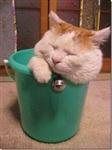 Самый ленивый кот, Фото: 3