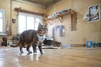 Волонтеры спасли кошек из адской квартиры, Фото: 1