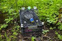 Кладбище домашних животных в Туле, Фото: 25