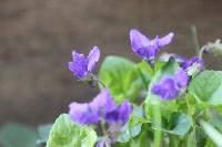 Краски весны в Туле, Фото: 11