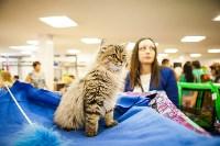 """Выставка """"Пряничные кошки"""". 15-16 августа 2015 года., Фото: 138"""