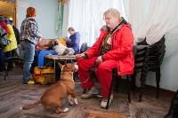 Выставка собак в Туле, 29.11.2015, Фото: 57