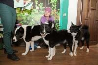 Выставка собак в Туле, 29.11.2015, Фото: 114