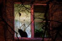 День светящихся окошек в объективах фотографов Myslo, Фото: 45