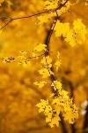 Золотая осень в Туле-2019, Фото: 99