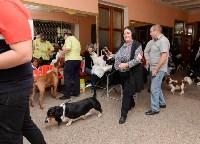 """Выставки собак в ДК """"Косогорец"""", Фото: 44"""