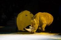 Туляков приглашают на новогоднее представление «Ёлка в цирке», Фото: 64