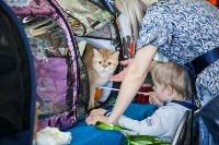 Международная выставка кошек. 16-17 апреля 2016 года, Фото: 77