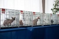 Выставка кошек в ГКЗ. 26 марта 2016 года, Фото: 11