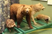 Открытие Краеведческого музея. 20 декабря 2013, Фото: 13