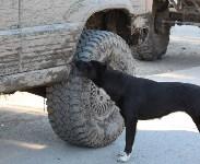 Рейд Орловы ворота. 22.08.2015, Фото: 121