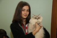 Выставка кошек. 21.12.2014, Фото: 19