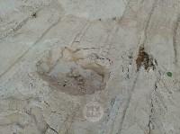 """""""Озеро"""" в Комарках засыпают доломитовой мукой, Фото: 6"""