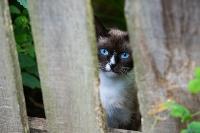 Тульские котики, Фото: 50