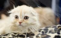 Выставка кошек. 4 и 5 апреля 2015 года в ГКЗ., Фото: 81
